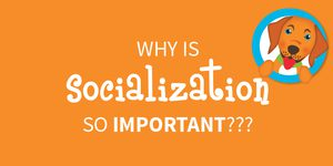 puppy socialization banner