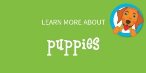 button for puppy training in wilmington nc