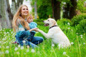dog training for baby