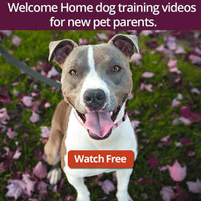 Watch the free Welcome Home Video series for new pet parents.